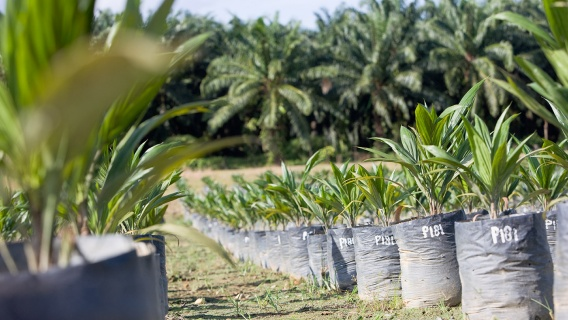 Neste's palm oil and PFAD supply chain data from 2017 are now available online.