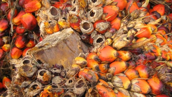 All palm oil sourced by Neste is ISCC certified and supplied by carefully selected plantations in Malaysia and Indonesia.